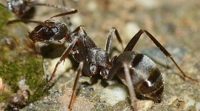 Spring Valley Ant Pest Control