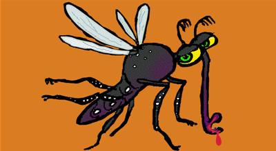 Dengue Fever Mosquito Problem