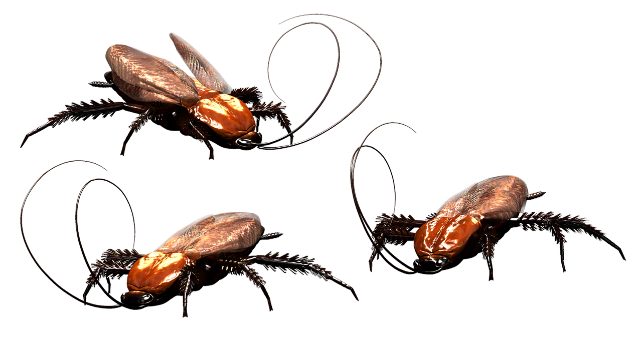 Spring Valley Pest Control Cockroaches
