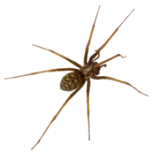 Spiders can be a part of pest control management